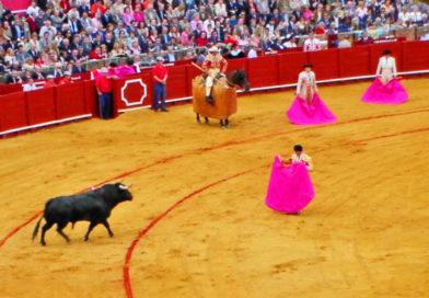 """""""Einen wilden Stier kann man nicht im Zoo halten"""": Buch über die Stierkampfkunst auf den Balearen"""