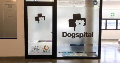 Hunde im Krankenhaus erlaubt: Dogspital macht Schule