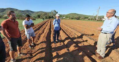 Kleine Bauern auf Ibiza gegen große Supermärkte