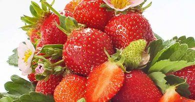 Klein, aber echt süß: Die einheimische Ibiza-Erdbeere kommt wieder zum Erblühen