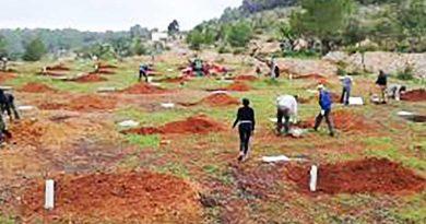 Mehr als 800 neue Mandelbäume schlagen auf Ibiza Wurzeln
