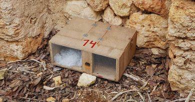 Schlangenfallen zu reduzierten Preisen auf Ibiza