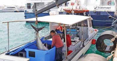 Der Bestand des Roten Thuns in ibizenkischen Gewässern hat sich gut erholt