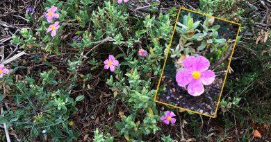 Uralte Heilpflanze macht Coronaviren den Garaus