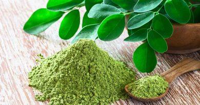 Moringa: Der vielseitige Wunderbaum aus Nord-Indien erobert Ibizas Küchen