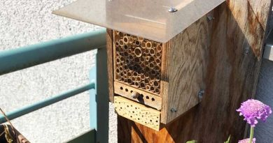 Eröffnung von fünf Insektenhotels – Palmas Parks machen den ersten Schritt