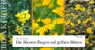 Duftend und leuchtend gelb: Bienen-Magneten wachsen auf Ibiza in Hülle und Fülle