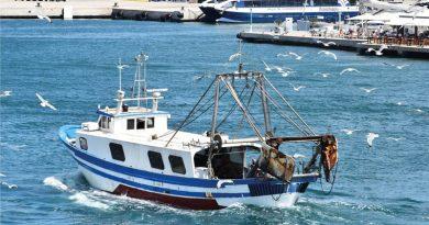 Bilanz der Berufsfischer: Mehr Fänge, aber von geringerem Wert – Weniger Nachfrage auf Ibiza nach Langusten und mehr nach Thunfisch