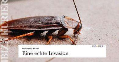 Kakerlaken-Invasion in der Calle Pere Francés – Fenster von verwahrloster Messi-Wohnung stehen offen