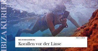Beim Luftanhalten den Auslöser drücken – Joan Sans lehrt Unterwasserfotografie